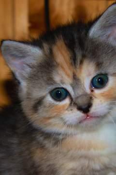 kitten_240x360