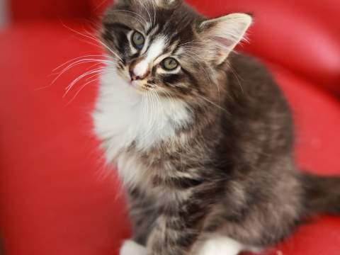 kitten_480x360